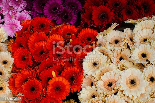 Colorful flower background with copy space photographed from above