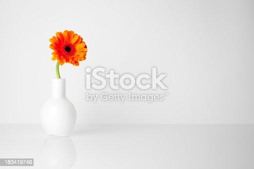 Minimalistic still life of an orange gerbera.