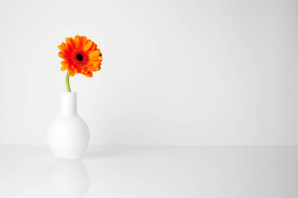 Gerbera flower in white vase Minimalistic still life of an orange gerbera. single flower stock pictures, royalty-free photos & images
