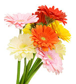istock gerbera flower on a white background 1248740374