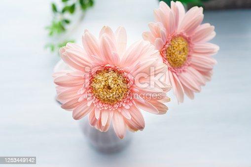 1090975842 istock photo Gerbera flower on wooden table 1253449142