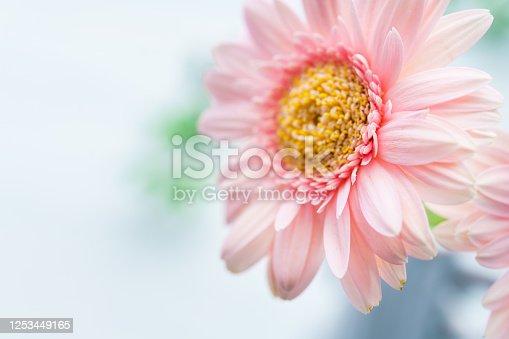 1090975842 istock photo Gerbera flower on wooden table 1253449165