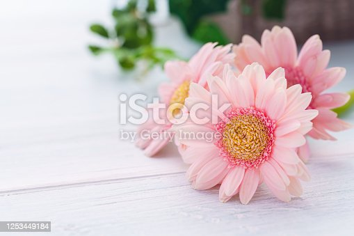 1090975842 istock photo Gerbera flower on wooden table 1253449184