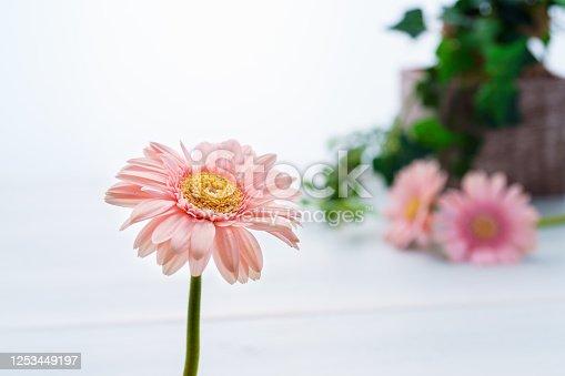1090975842 istock photo Gerbera flower on wooden table 1253449197