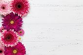 istock Gerbera flowers 941245628