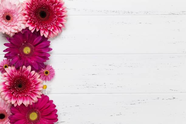 Gerbera flowers picture id941245628?b=1&k=6&m=941245628&s=612x612&w=0&h=cuflovhe5zblhnbj2ayfliq qvlueejnevxk4a3ds7u=