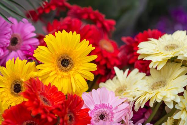 Gerbera flowers vor selling on  market stock photo