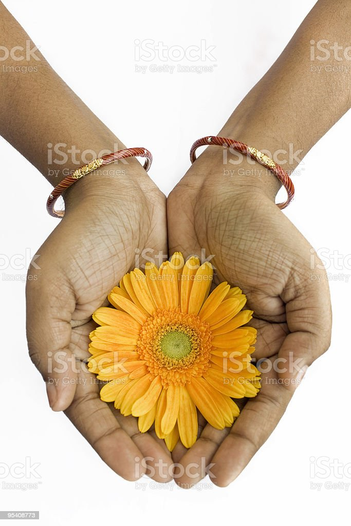 Gerbera In Hand royalty-free stock photo