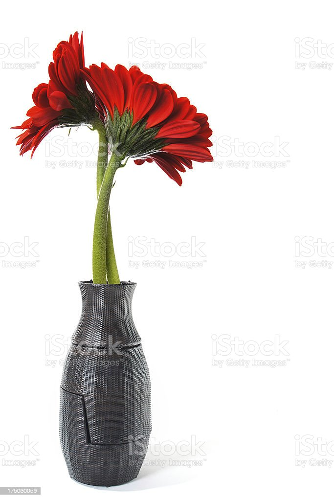 Gerbera in vase royalty-free stock photo