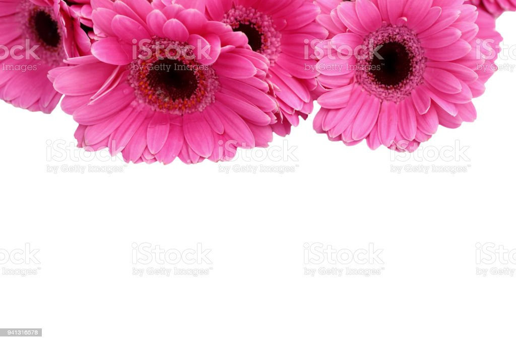 Gerbera Is A Flower Characterized By Many Corals And Most Often Used ...
