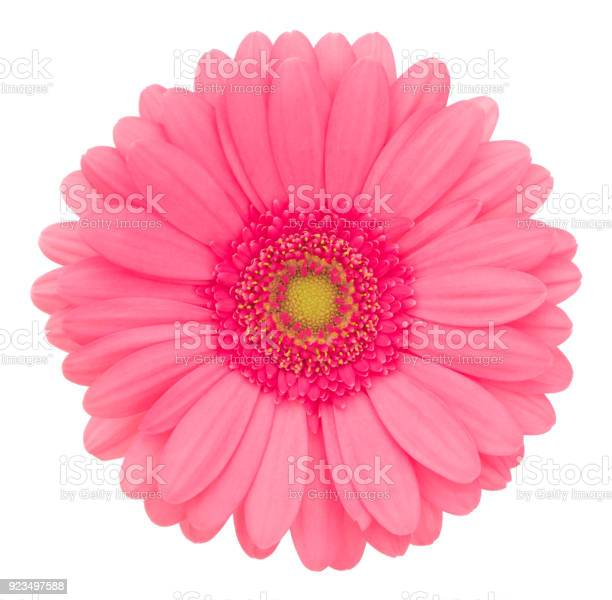 Gerbera isolated on white deep focus no dust no pollen picture id923497588?b=1&k=6&m=923497588&s=612x612&h=74lddfs4vak8v16okzvjrgsmyg4jexjqjpstluupgyw=