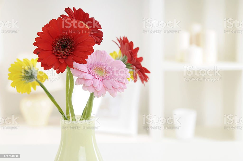 gerbera royalty-free stock photo