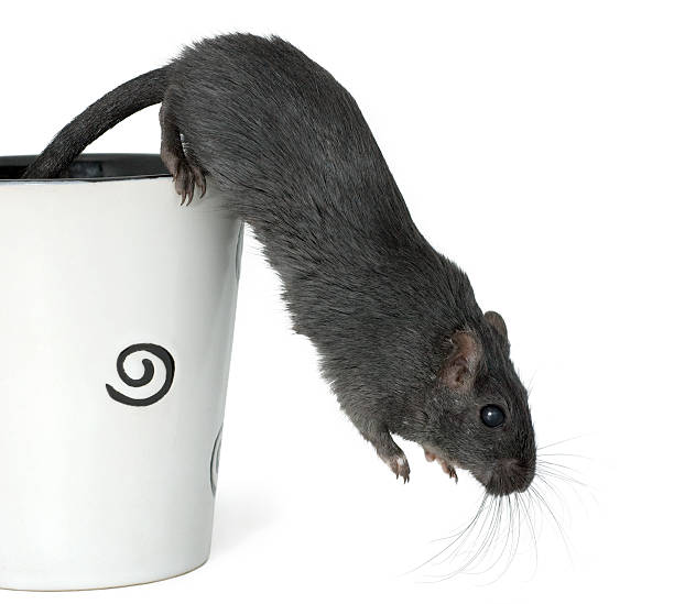 Gerbil jumping from a cup stock photo