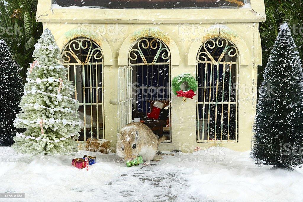 Gerbil's House at Christmas royalty-free stock photo