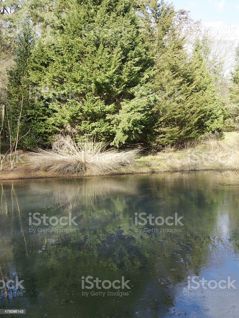 german forest nature royalty-free stock photo