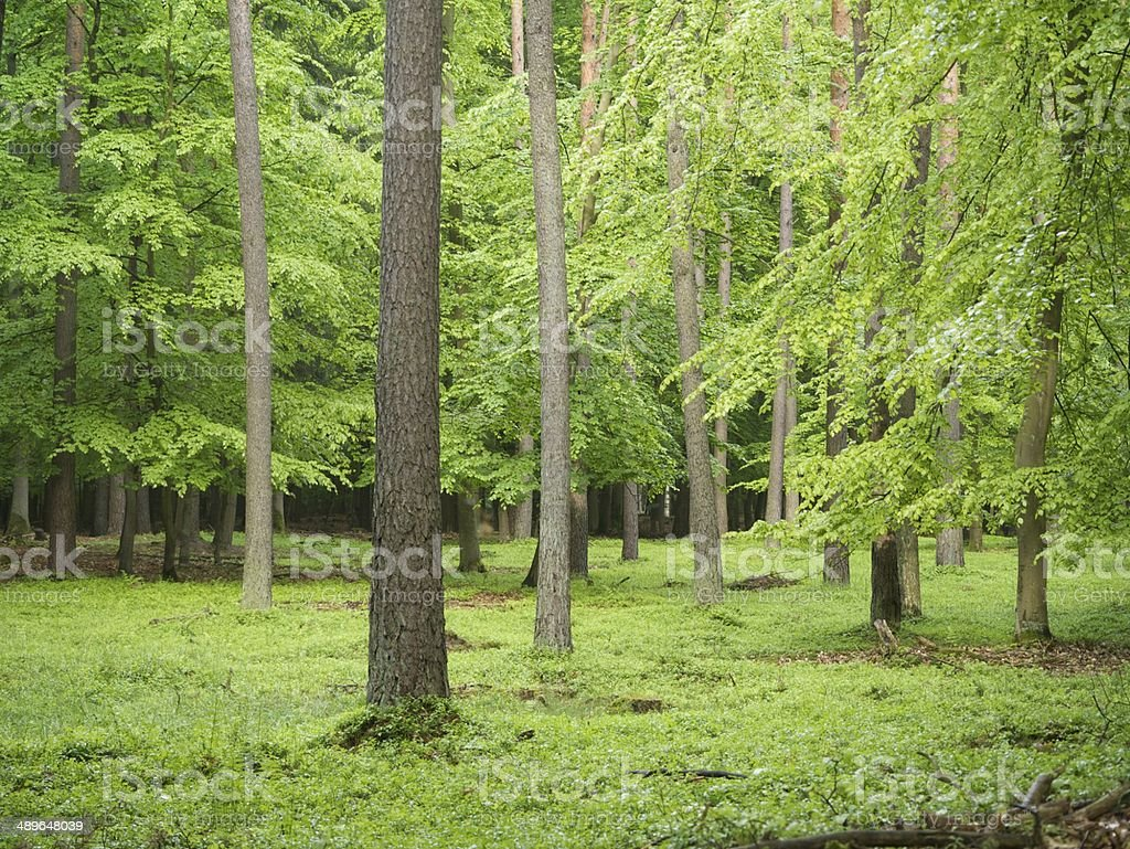 german forest nature stock photo