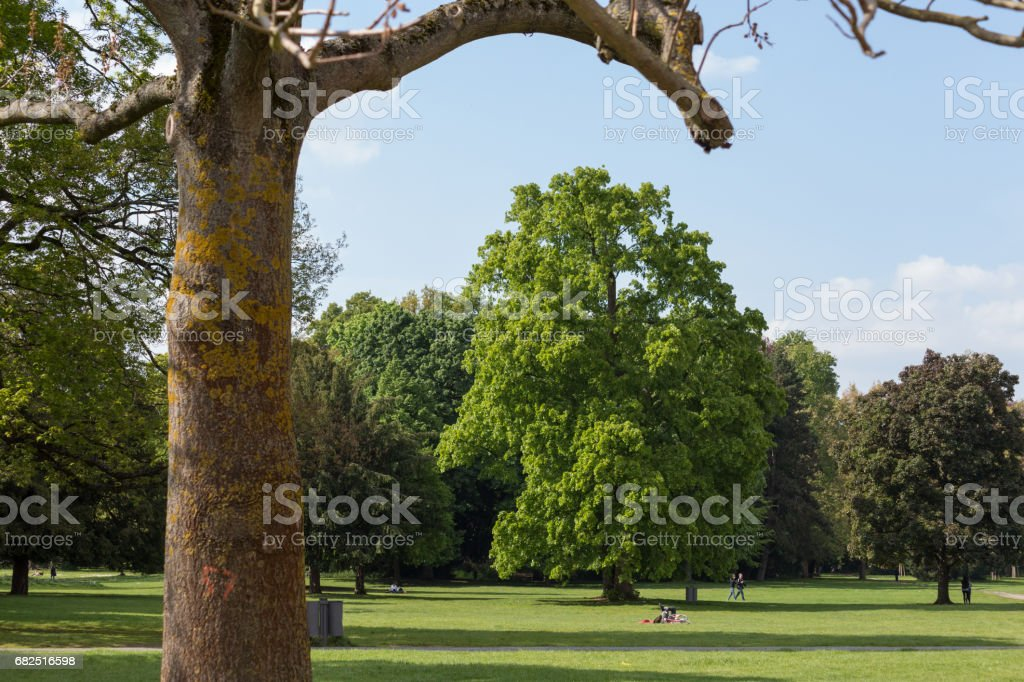 german parks in may royalty-free stock photo