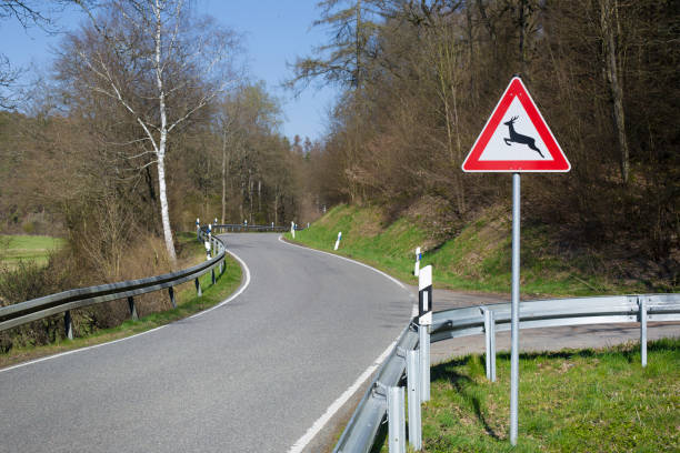 Deutsches Straßenschild - Hirschkreuzungsschild – Foto