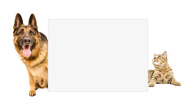 German shepherd and cat peeking from behind a banner picture id598138124?b=1&k=6&m=598138124&s=612x612&w=0&h=h4twcs6htdfk0035ap2s6awopxqncmqw0hjfsb7mtr8=