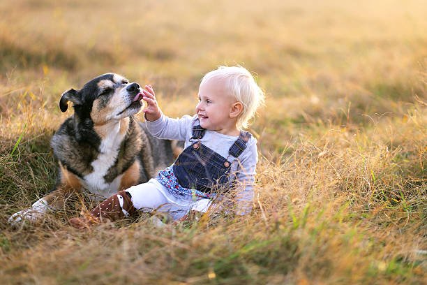 German Shepherd Dog Licking the Hand of His Baby Girl stock photo