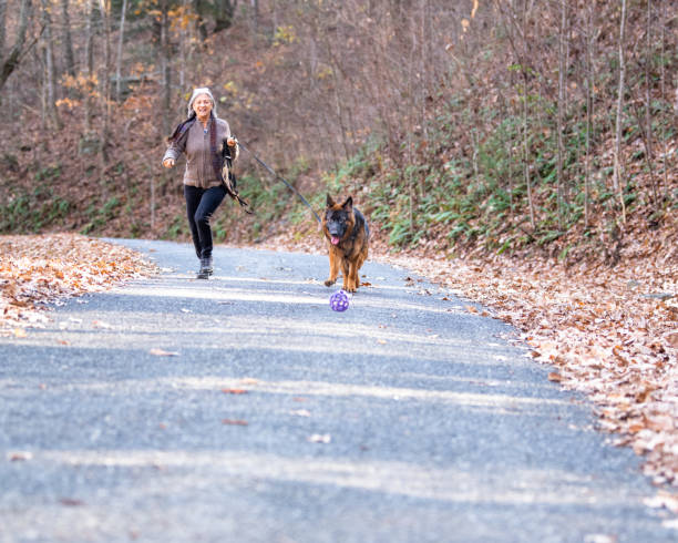 German shepherd dog with long coat chasing a ball picture id1189818991?b=1&k=6&m=1189818991&s=612x612&w=0&h=ooqtncet5xayk0e4yuwayodqwvtt9nds0smtsu5hazw=