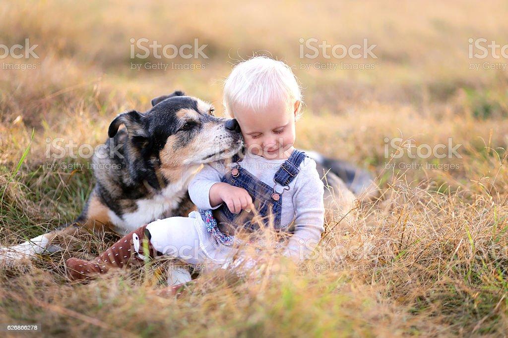 German Shepherd Miz Breed Dog Kissing Baby Girl on Cheek stock photo