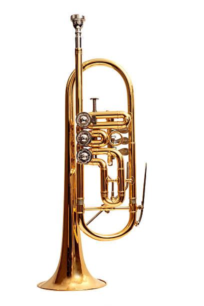 독일형 나팔꽃 - 트럼펫 뉴스 사진 이미지