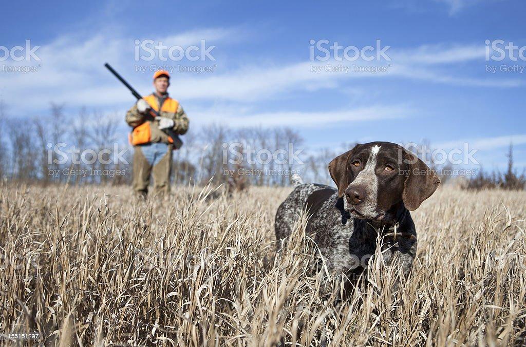 Pointer alemán Wirehair y hombre Upland caza de pájaros. - foto de stock