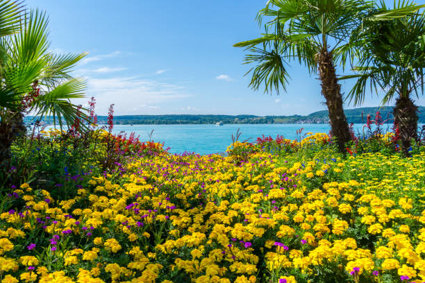 Germany, Lake constance behind palm trees and countless colorful flowers Germany, Lake constance behind palm trees and countless colorful flowers Bodensee stock pictures, royalty-free photos & images