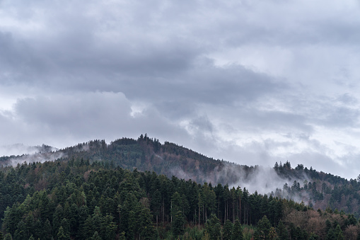 Germany, Magic foggy black forest nature landscape