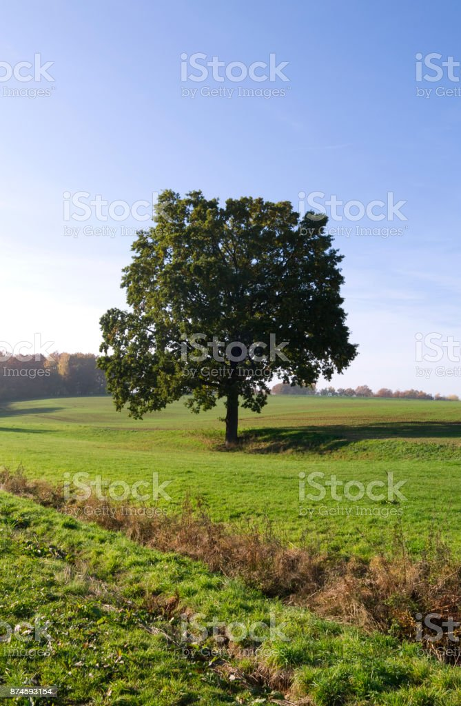 Germany: Solitary tree in the gently rolling countryside on a sunny day at the end of October stock photo