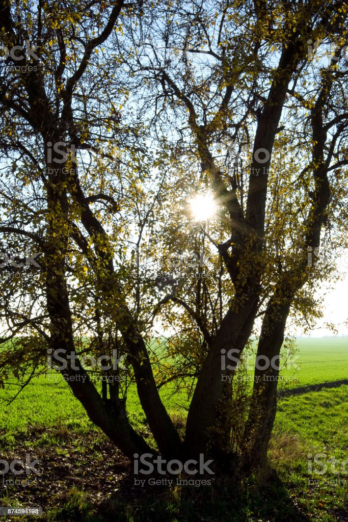 Germany: Tree at the edge of a small farm track in Eastern Thuringia stock photo