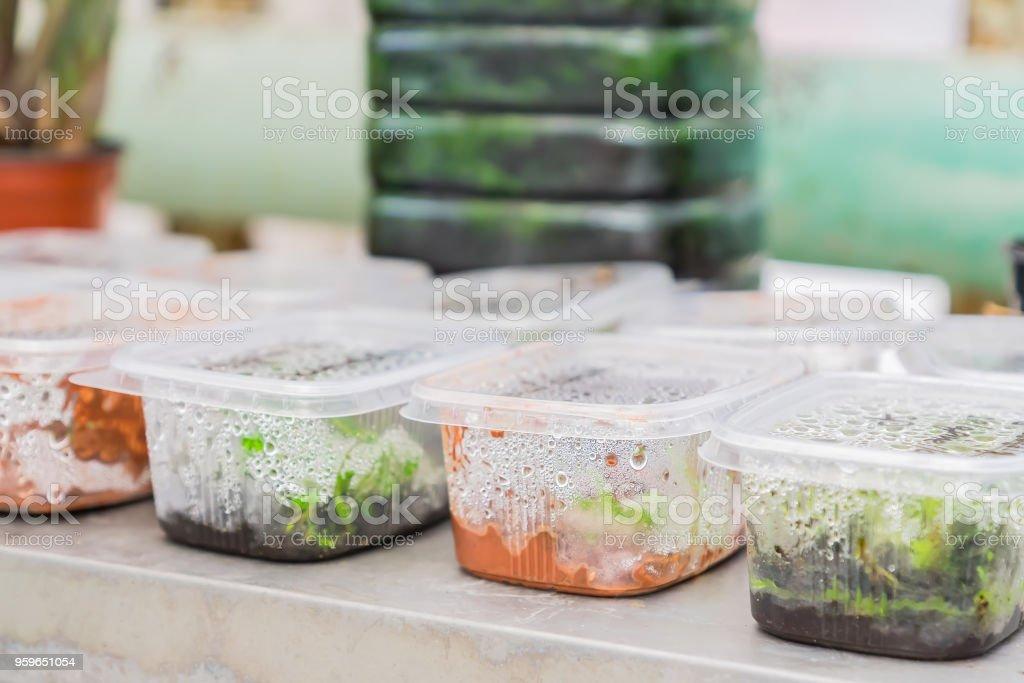 germinación de las semillas en recipientes de plástico - Foto de stock de Agricultura libre de derechos