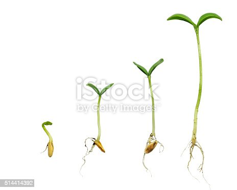 147512291 istock photo Germination Sequence Of Plant Evolution 514414392