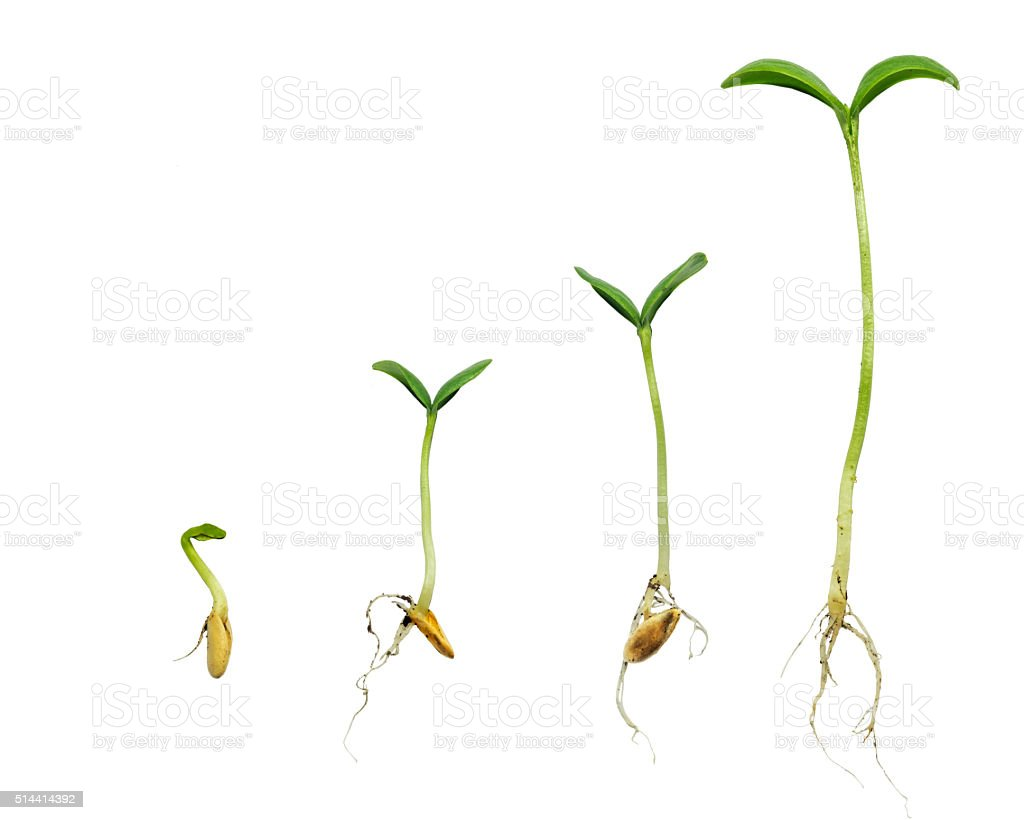 Germination Sequence Of Plant Evolution stock photo