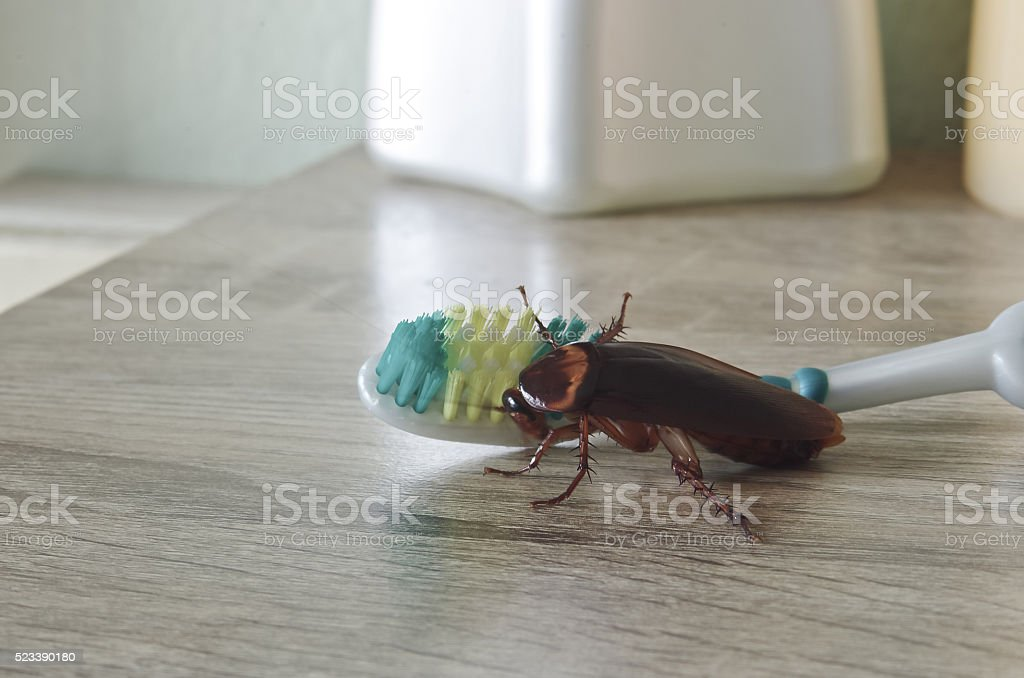 germs from cockroach stock photo