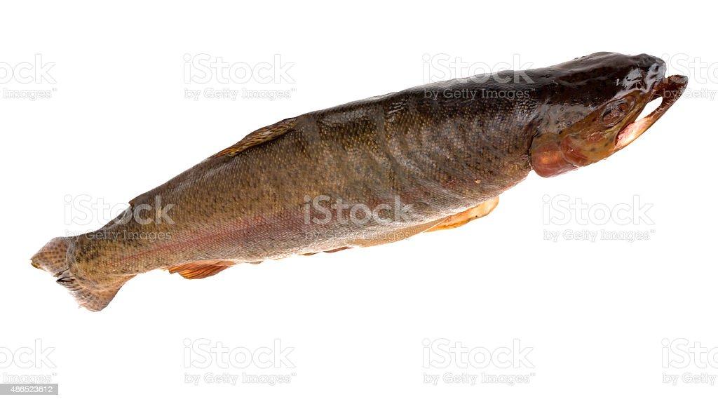 geräucherte Forelle stock photo