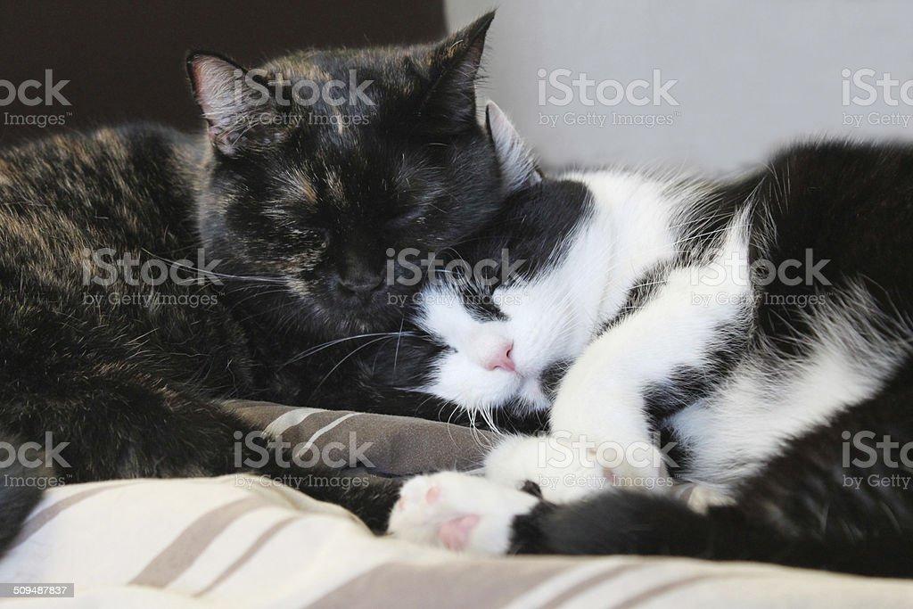 Geschwisterliebe stock photo