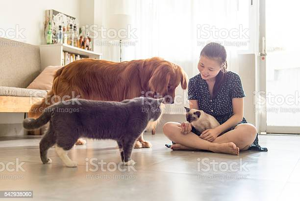 Get along with cats and dogs and girls picture id542938060?b=1&k=6&m=542938060&s=612x612&h=0z3o3hfpuxphg61ffwf74jwxlxdxp4d5xayo5hyzs c=