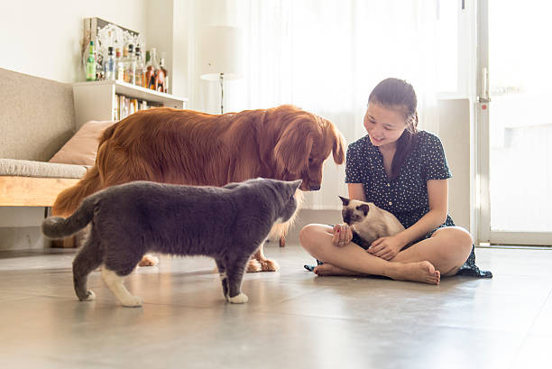 Get along with cats and dogs and girls - foto de acervo