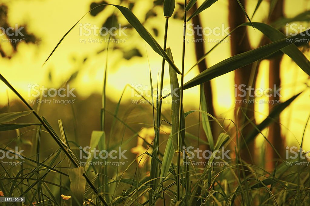 Get down in the grass royalty-free stock photo