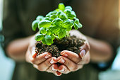 Cropped shot of a woman holding a plant growing out of soil