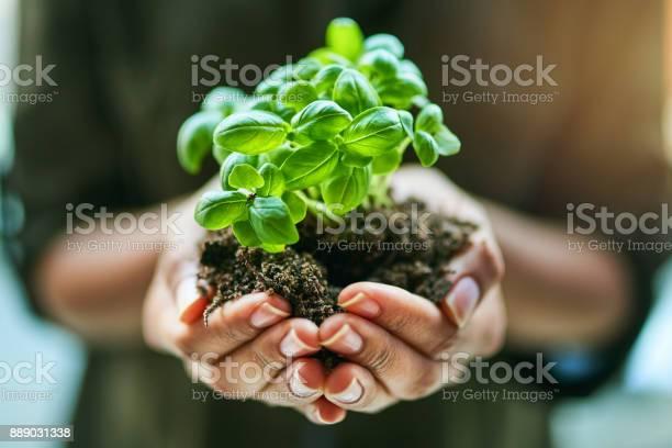 Get sowing get growing picture id889031338?b=1&k=6&m=889031338&s=612x612&h=s4lfj8h9ctstqihisdsyg9gmcvhu cmgztgdog s0mo=
