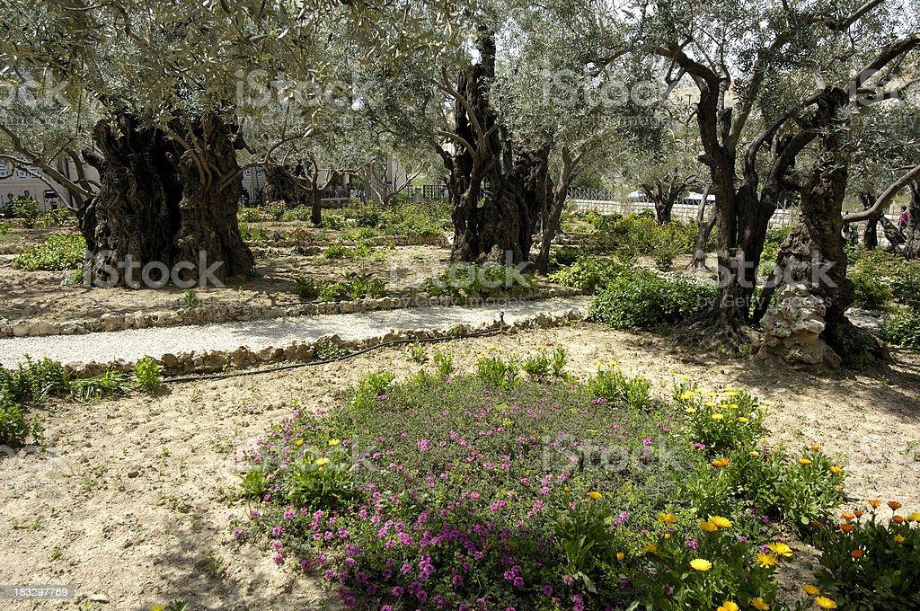 Gethsemane royalty-free stock photo