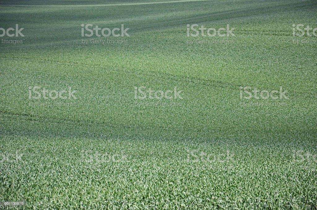 Getreidefeld stock photo