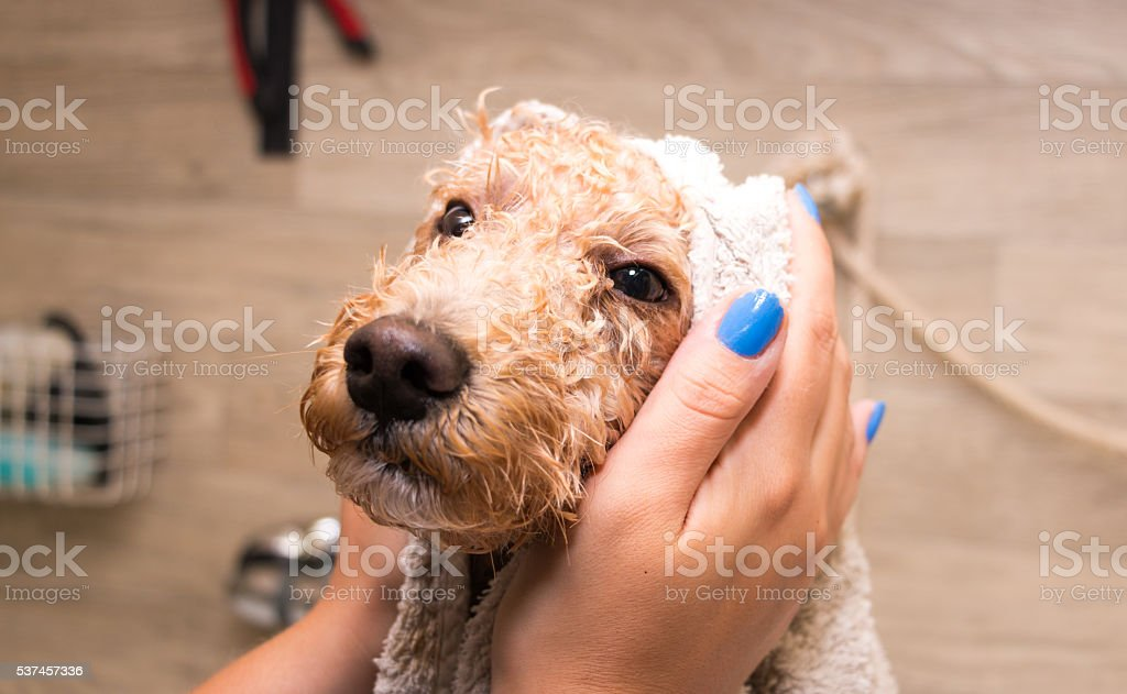 Getting a bath ! stock photo