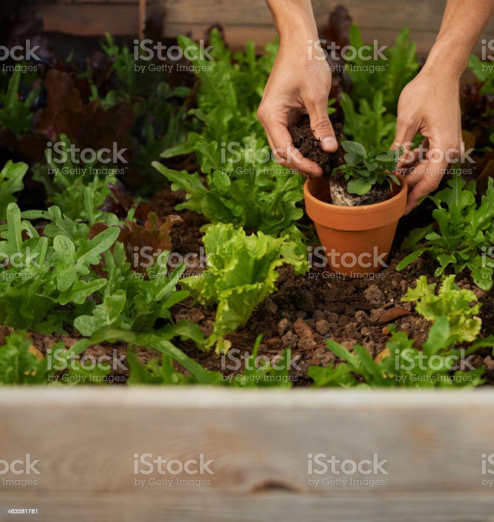 Getting back to nature through gardening stock photo