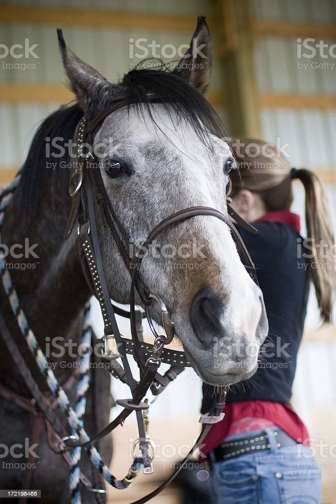Getting ready for a ride royalty-free stock photo