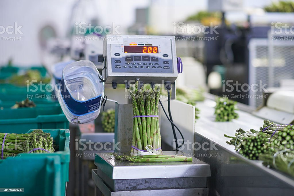 Getting the asparagus ready for distribution stock photo