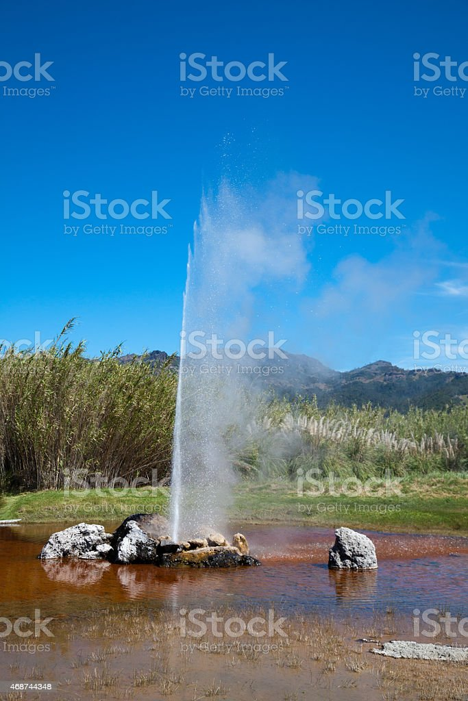 Geyser Erupting  in Calistoga California stock photo